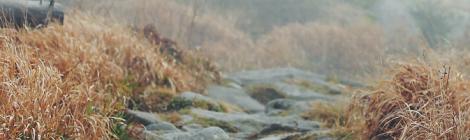 Stone path in a field